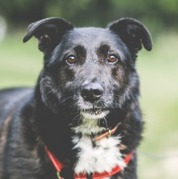 Терра - Собаки в добрые руки