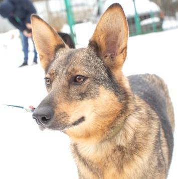 Рейна - Собаки в добрые руки