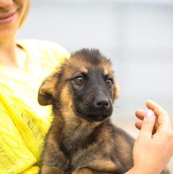 Мишаня - Собаки в добрые руки