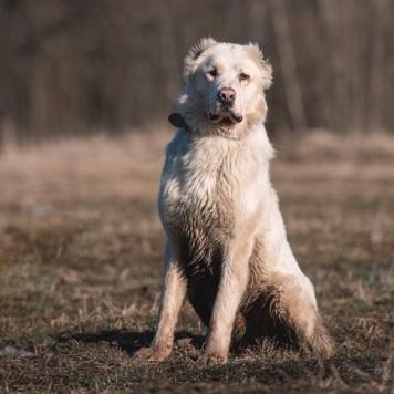 Аскар - Собаки в добрые руки