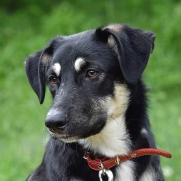 Юки - Собаки в добрые руки