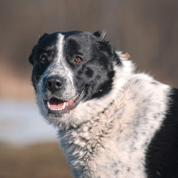 Санжар - Собаки в добрые руки