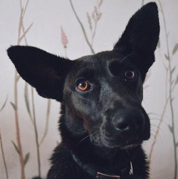 Киндер - Найденные собаки