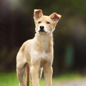 Олимпия - Собаки в добрые руки