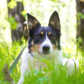 Флора - Собаки в добрые руки