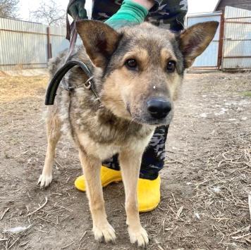 Илва - Собаки в добрые руки
