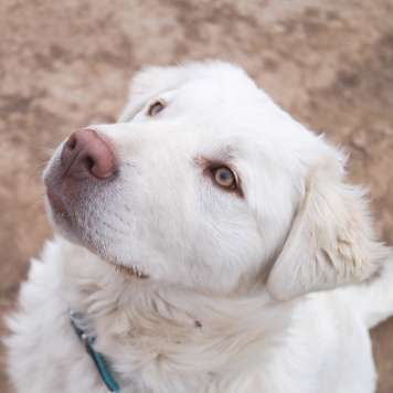 Умка - Собаки в добрые руки