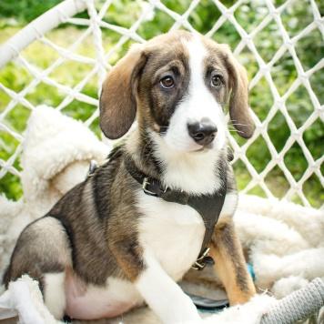 Карин - Собаки в добрые руки