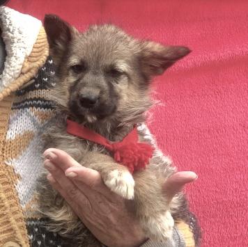 Чуча - Собаки в добрые руки