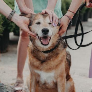Рейс - Собаки в добрые руки