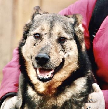 Кимбо - Собаки в добрые руки