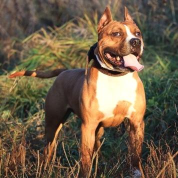 Леонтий - Собаки в добрые руки