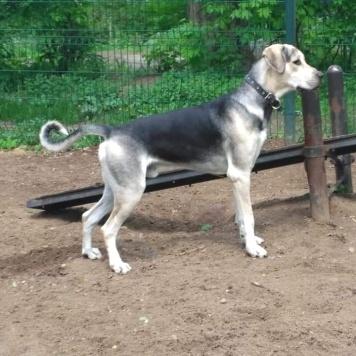Бивис - Собаки в добрые руки