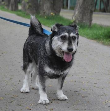 Мотя - Найденные собаки