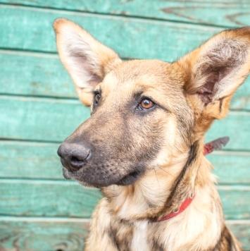 Бекки - Собаки в добрые руки