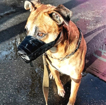 Тимоша - Собаки в добрые руки