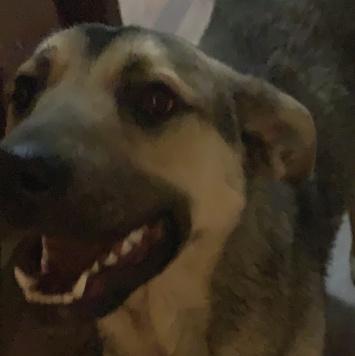 Потеряшка - Собаки в добрые руки