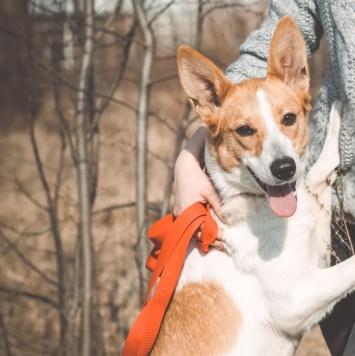 Энергичная Белла - Собаки в добрые руки