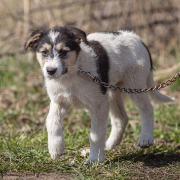 Гуччи - Собаки в добрые руки