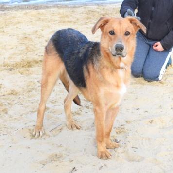 Дуняша - Собаки в добрые руки