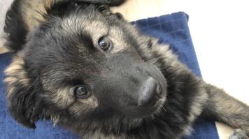 Тайсон - Собаки в добрые руки