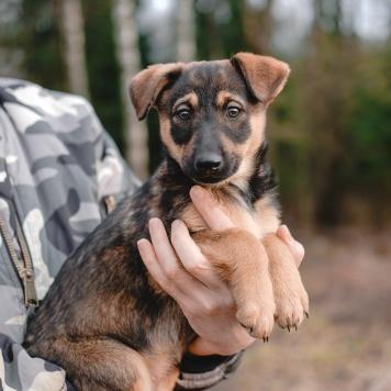 Туве - Собаки в добрые руки
