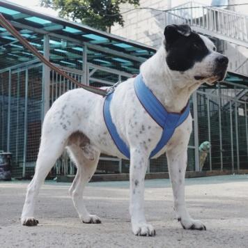 Владис - Собаки в добрые руки