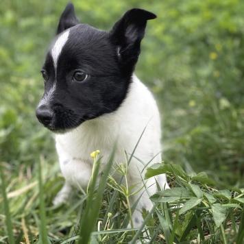 Альфик - Собаки в добрые руки