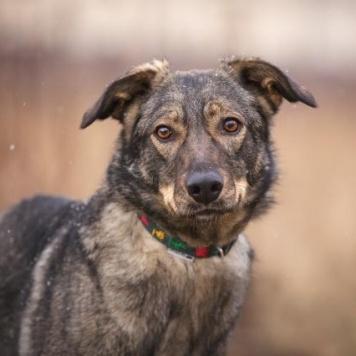 Эрика - Собаки в добрые руки