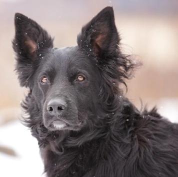 Устинья - Собаки в добрые руки