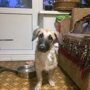 Тоша - Собаки в добрые руки