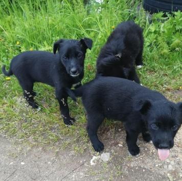 Клякса - Найденные собаки