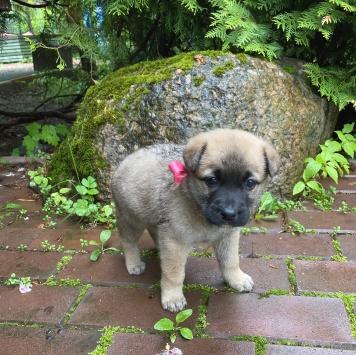 Розовая Ленточка - Собаки в добрые руки