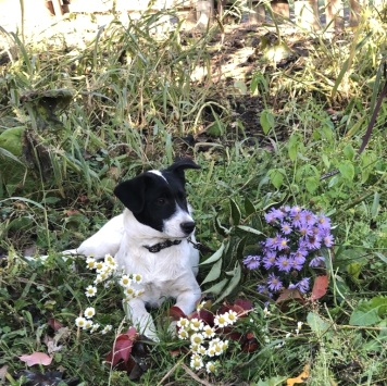Лакки и Пятнашка - Собаки в добрые руки