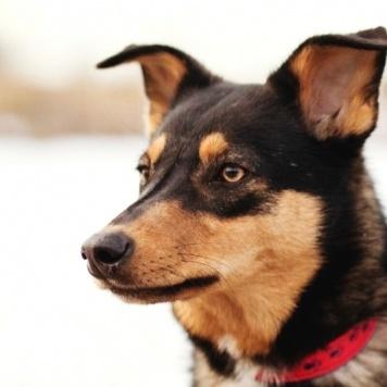 Барни - Собаки в добрые руки