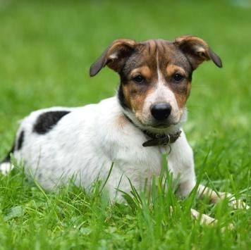 Жужа - Собаки в добрые руки