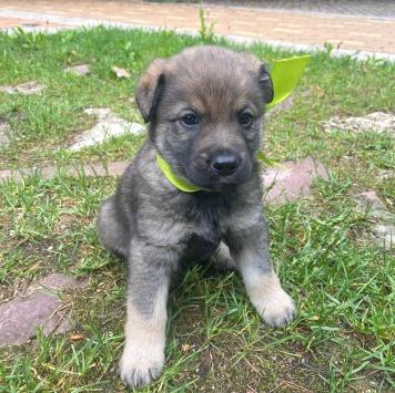Зеленая Ленточка - Собаки в добрые руки