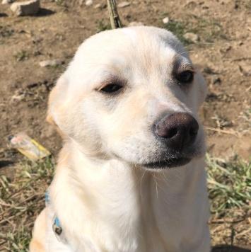Швепс - Собаки в добрые руки