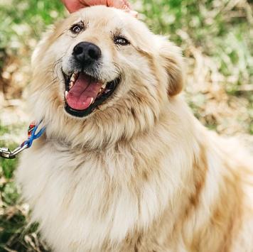 Потапчик - Собаки в добрые руки