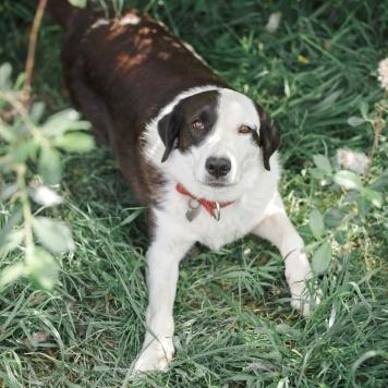 Мальта - Собаки в добрые руки