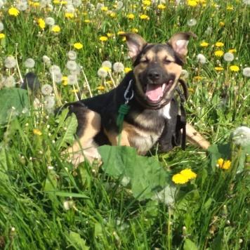 Гаврюша - Найденные собаки