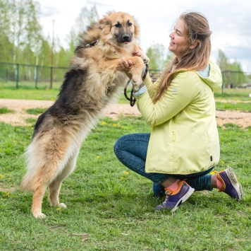 Сильвия - Собаки в добрые руки