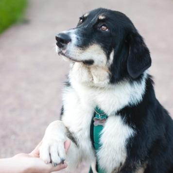 Шеридан - Собаки в добрые руки