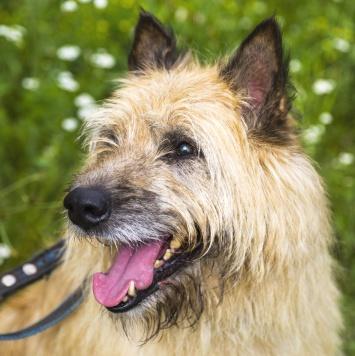 Цитрус - Собаки в добрые руки
