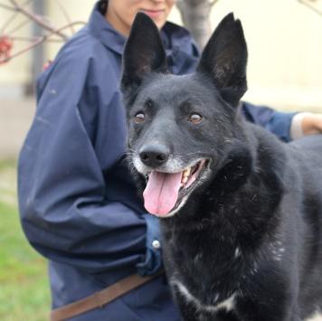 Гаврюша - Собаки в добрые руки