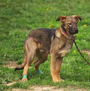 Люсьен - Собаки в добрые руки