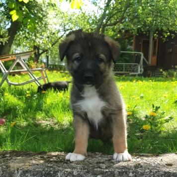 Леночка - Собаки в добрые руки