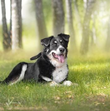 Слай - Собаки в добрые руки
