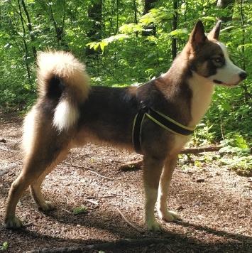 Джек - Найденные собаки