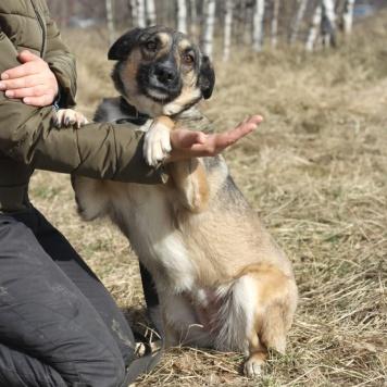 Лира - Собаки в добрые руки